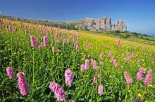 Alpe di Siusi - mountains of coral and Schlernboden Refugee